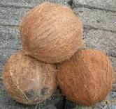 Coconut exporters from india .